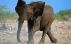 В Индии не могут поймать слона, убившего 27 человек